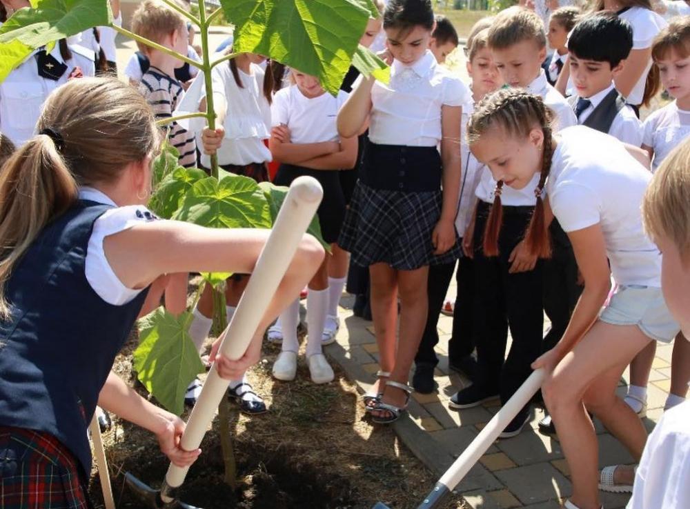 В Геленджике стало больше деревьев