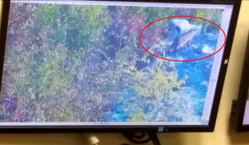 Жители Геленджика поверили в фейковую новость про побег леопарда