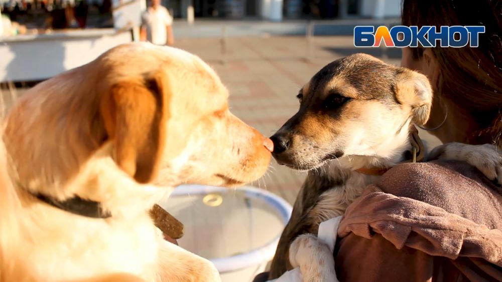 В Геленджике прошел фестиваль домашних животных «Верные друзья»