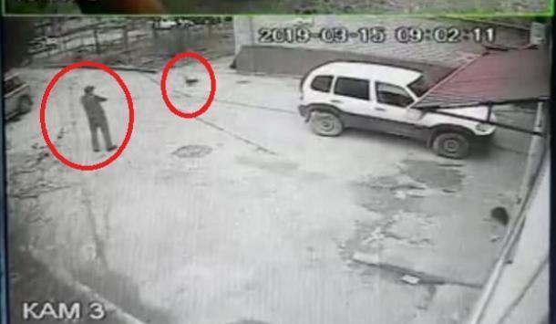 Неизвестный устроил стрельбу по кошкам в селе Дивноморское