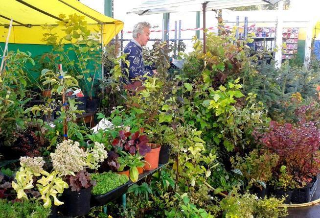 В Геленджике заработает ярмарка саженцев и садовых цветов